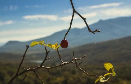 berry: Mountain berry Stock Photo
