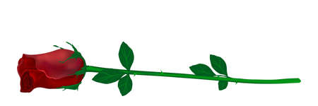 lying vector red rose on a stem with leaves and thorns isolated on white