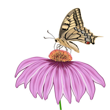 butterfly on a flower Echinacea isolated on white
