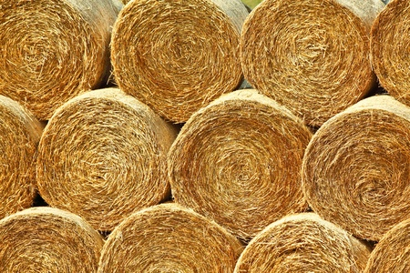 yellow rolls of straw in the end of summer photo