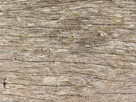 A natural brown wood texture.