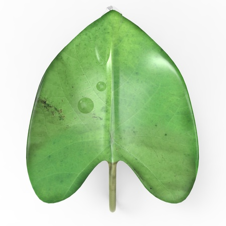 This is a 3d illustration of a leaf   This is about nature  Stock Illustration - 17536120