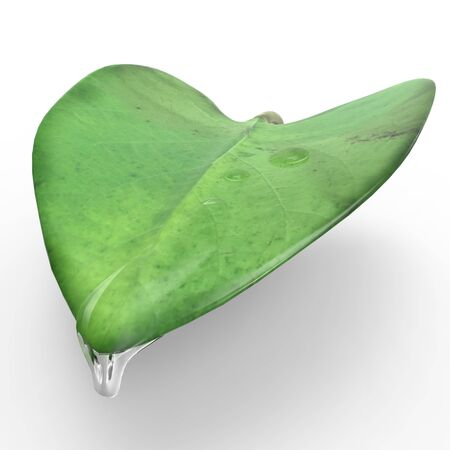 This is a 3d illustration of a leaf   This is about nature  Stock Illustration - 17536029