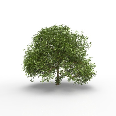 A tree on white background photo