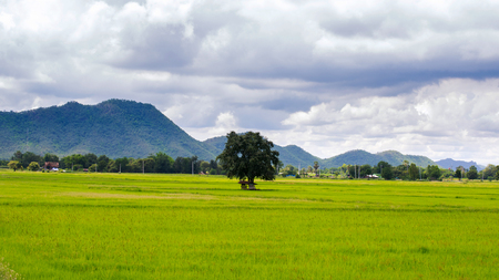 Paddy rice field and farmhouse or cottage green moutian photo
