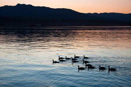 Canada Geese silhouetted against the water. Stock Photo