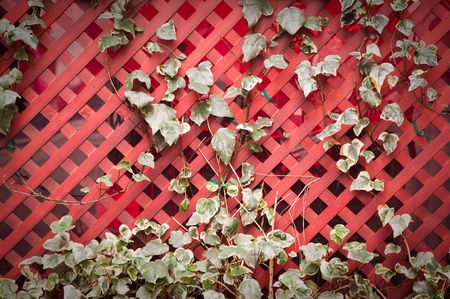 Ivy growing on a rustic red wooden trellis. Stock Photo