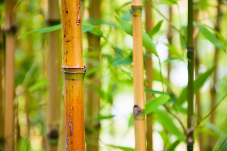 Bamboo canes growing in their natural habitat. Stock Photo