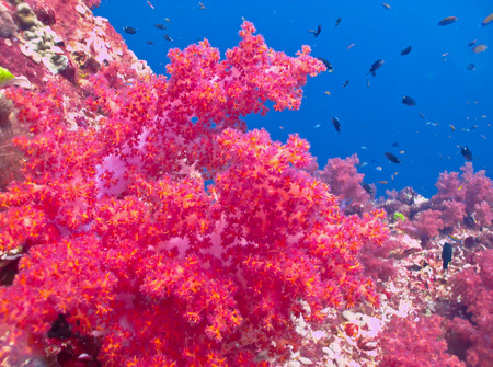 Closeup of soft corals on a tropical coral reef photo