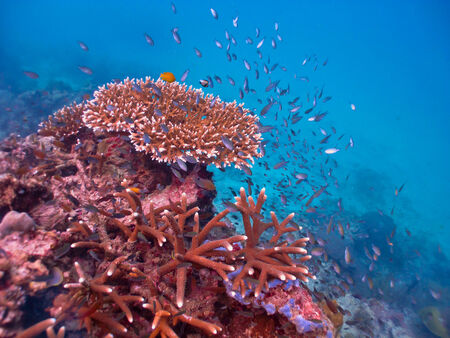 softcoral: Beautiful coral reef wall teeming with coral and fish life Stock Photo