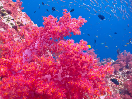 soft corals: Closeup of soft corals on a tropical coral reef
