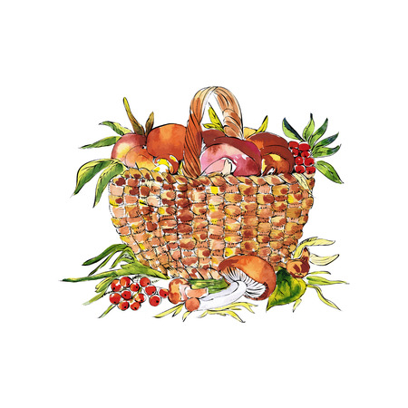 food basket: Colored sketch illustration of basket with mashrooms and rowan Illustration
