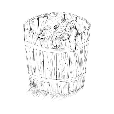 wooden bucket: black and white sketch illustration of a pig in wooden bucket