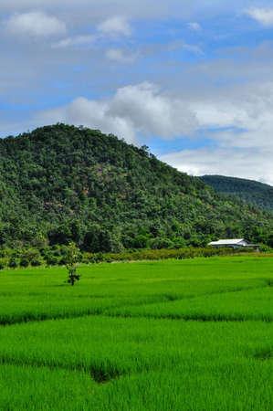 Paddy Mountain Sky , Thailand photo