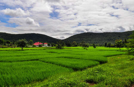Paddy Mountain Sky , Thailand Stock Photo - 13416609