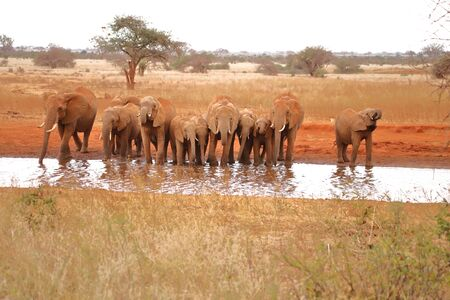 Eleven thirsty elephants at a waterhole in the Ngutuni Game Sanctuary Stock fotó