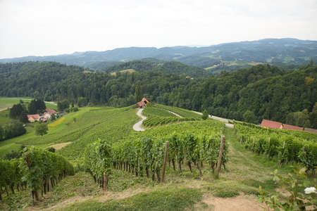 View on Špi�nik in Slovenia with its heart-shaped road through the vineyards Standard-Bild