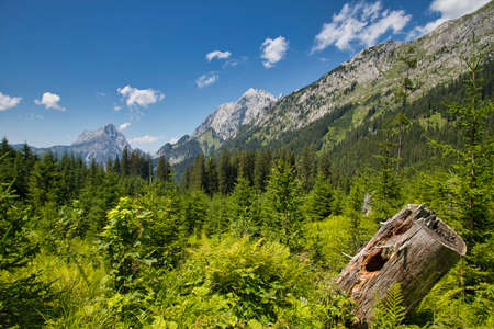 Forest and mountains in the Gesäuse National Park in Austria