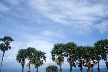 palm trees on blue sky blackground photo