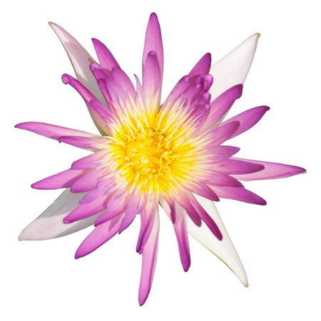 Water lily flower isolate on the white background photo