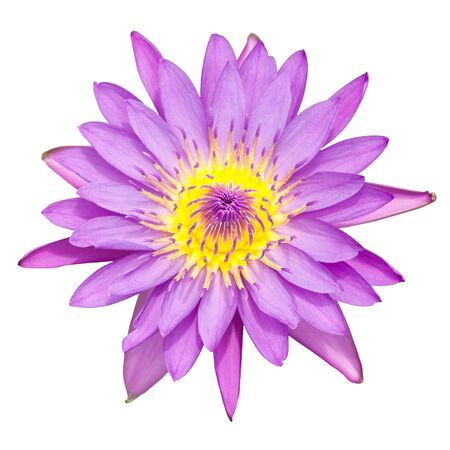 Water lily flower isolate on the white background Stock Photo - 15447797