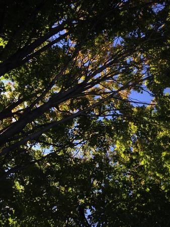 Tree canopy Zdjęcie Seryjne