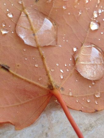 Drops of water on an autumn leaf