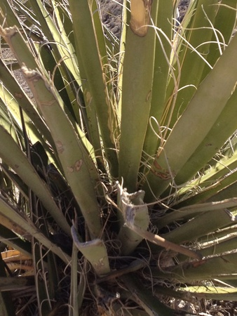 Cactus Zdjęcie Seryjne