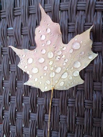 Rain drops on black  white leaf