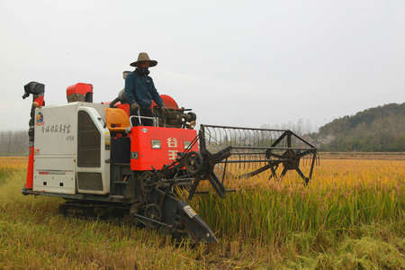 Farmer harvest the crops with a combine harvester machine