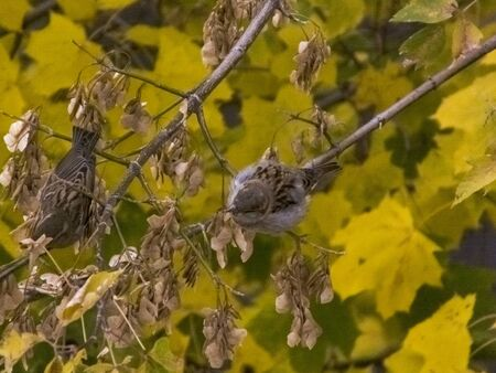 The bird sits on a branch in autumn against the background of leaves. View from above