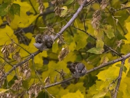 The bird sits on a branch in autumn against the background of leaves Banco de Imagens