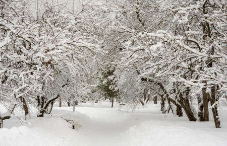 winter landscape, trees, forest, thicket, snowdrifts