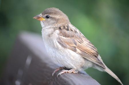 Young bird photo