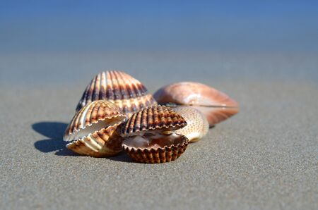 resort life: Sea shells on a beach Stock Photo