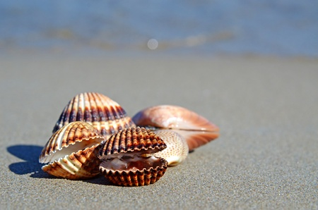 Sea shells on a beach Stock Photo - 11371856