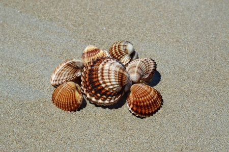 Sea shells on a beach photo