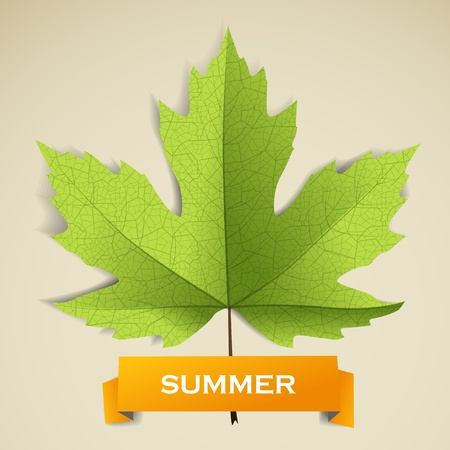 macro leaf: Maple leave with summer banner