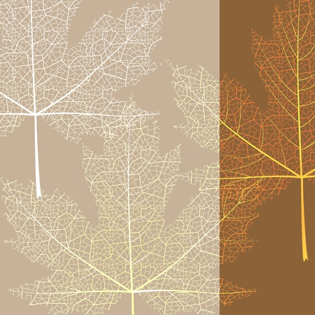 Maple leave brown background Vector