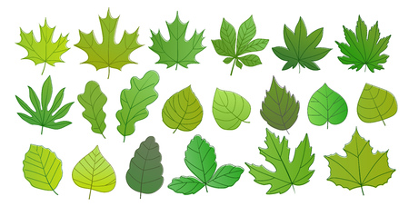 Different green summer leaves vector collection. Leaves isolated on white