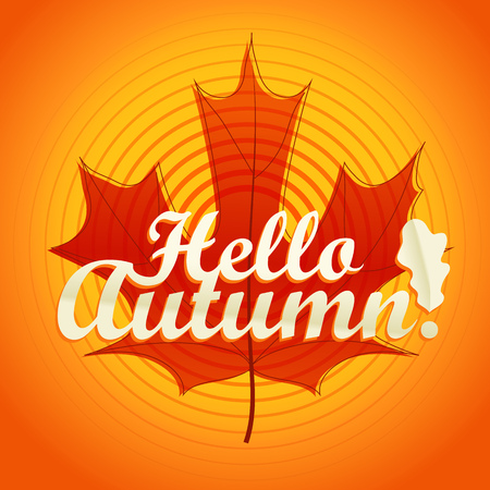 autumn color: Hello autumn logo. Color maple leaf vector illustration