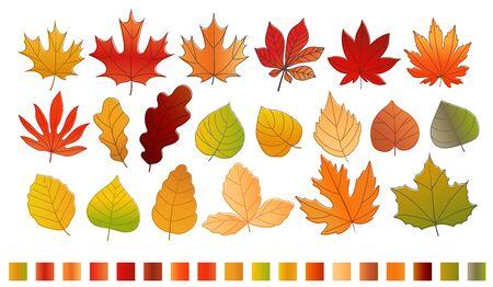 pallette: Différent automne couleur feuilles collection de vecteur. Feuilles isolé sur blanc avec la couleur pallette