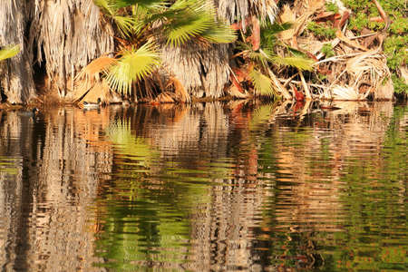 pond with reflection of palm trees Stock Photo