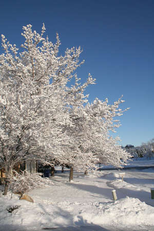 tree covered in snow on a sunny day Stock Photo
