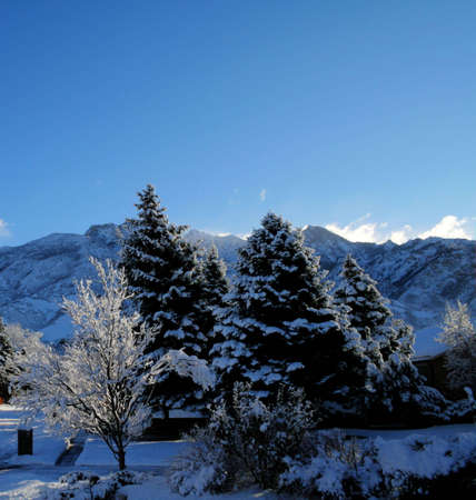 hdr image of snowy pine trees with mountains
