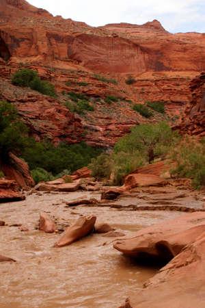 canyon de la rivi�re d�sert