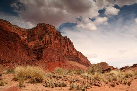 colorful desert scene
