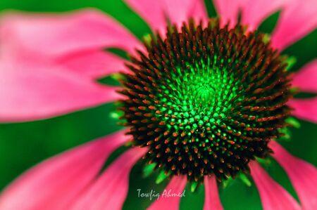 close up: Close up flower