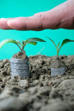 manos en la parte superior de los árboles que crecen en las monedas Foto de archivo