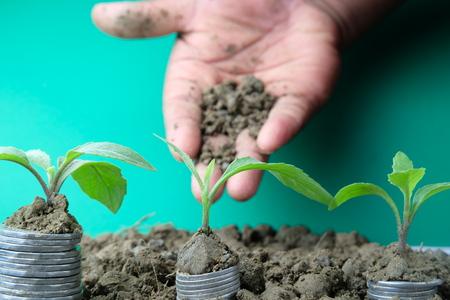Mano de un hombre de negocios dando tierra a un árbol que crece en monedas de oro